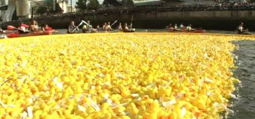 Los patos, agrupados en pelotón, cubren los primeros metros de la Estropatada de 2013. Foto: EiTB.