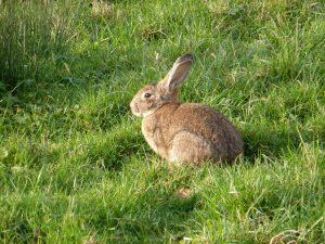 Un conejo. Foto: Antonio Garnateo