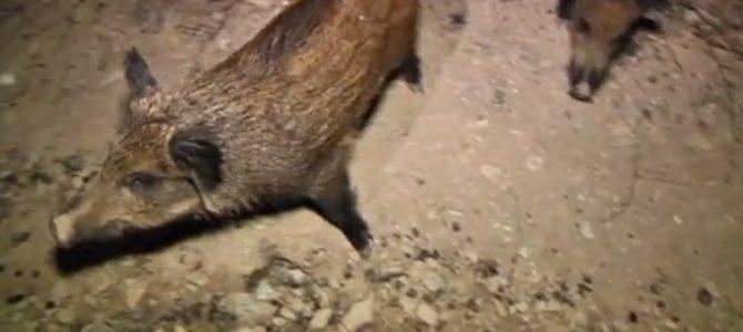 La temporada de caza mayor presenta varias novedades en Navarra