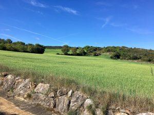 Campos de Ayegui (Navarra). Imagen de archivo: José María Vega