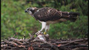 Un águila. Imagen de archivo: 'Teknopolis'