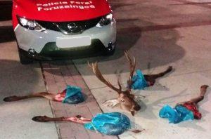 El ciervo descuartizado. Foto: Policía Foral