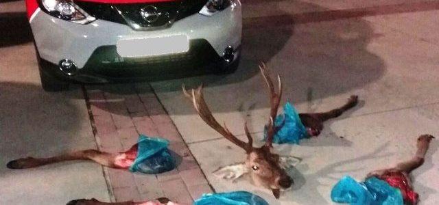 Interceptan a dos jóvenes que transportaban un ciervo descuartizado en Huarte