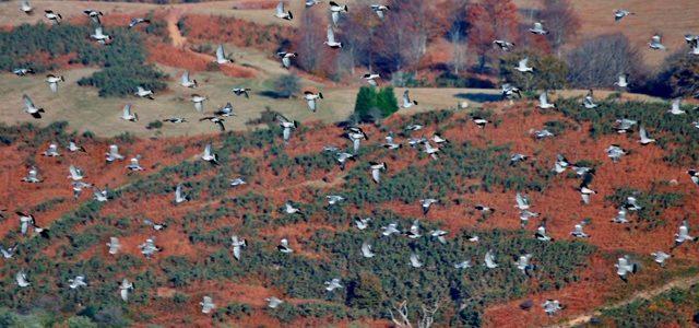 El 8 de marzo finaliza el plazo para solicitar la primera licencia de caza en Navarra
