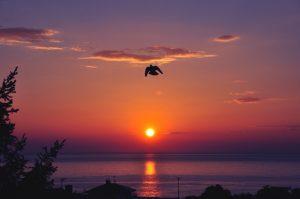 Una paloma en Lekeitio (Bizkaia). Foto: Aitor Goitiz Maruri