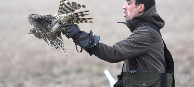 La caza puede ayudar a la conservación de las especies, según una revisión de 1000 estudios