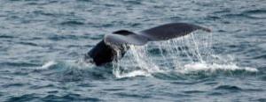 dos-ballenas_2624288