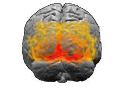 Vista posterior de la corteza visual primaria