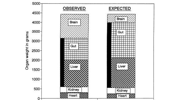En estas columnas se compara la proporción relativa de cada órgano o sistema en un ser humano real (observed) y la que hubiera tenido un primate antropomorfo de sus mismas características