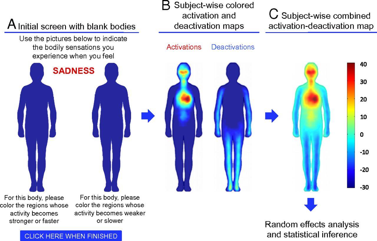 Los mapas corporales de las emociones | La Naturaleza Humana
