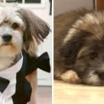 Clona a su perro por 50.000 dólares