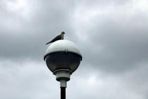 Una paloma se posa sobre una farol, apagada, a de la ciudad.