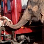 Robert Pattinson presentará 'Agua para elefantes' en Barcelona