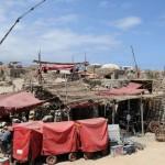 'Furia de Titanes', un peligro para las especies amenazadas de Tenerife