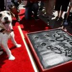 Uggie, el perro de 'The Artist' deja su huella en la historia