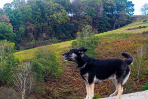 Foto de un perro suelto de Julen Iturbe Astuy enviada a la web de eitb.eus.