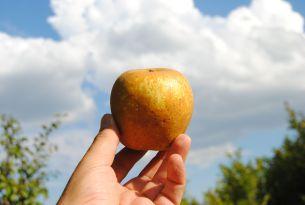 Manzana-Pera-18