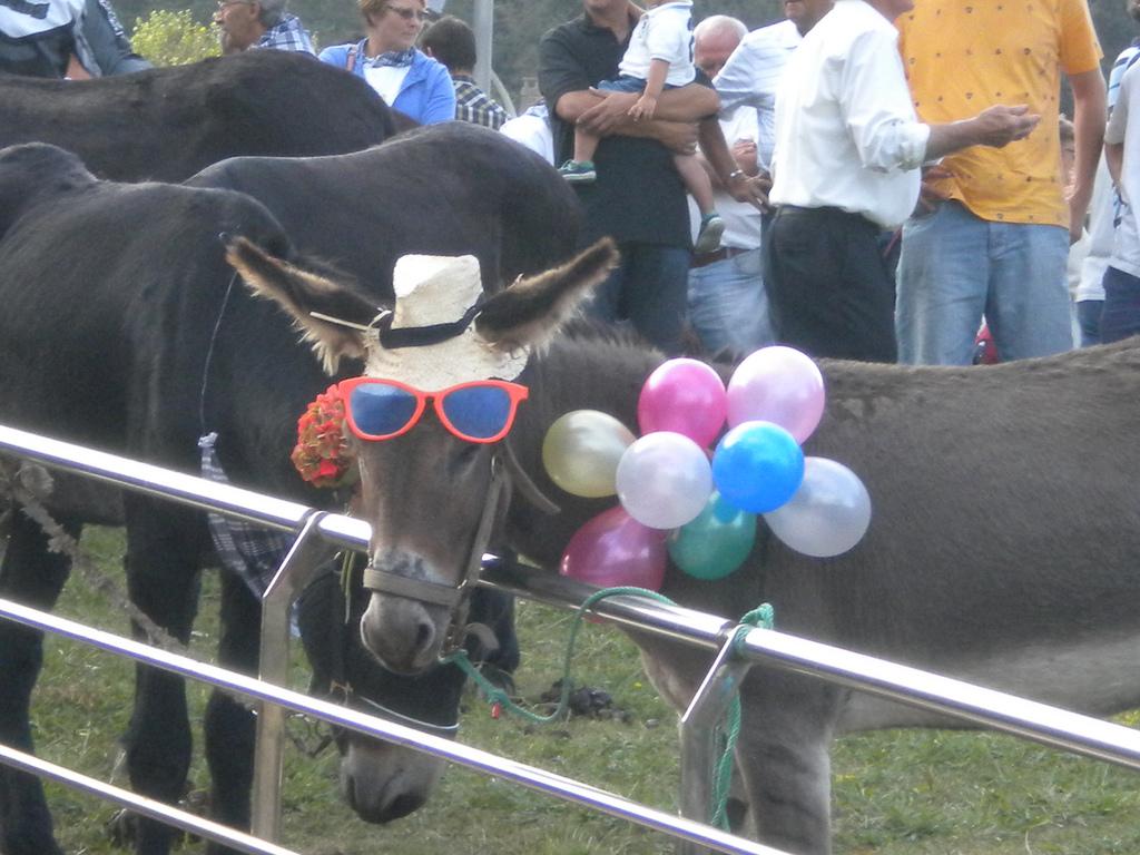 Imagen de un burro en fiestas. La foto es de  Leire Moral.