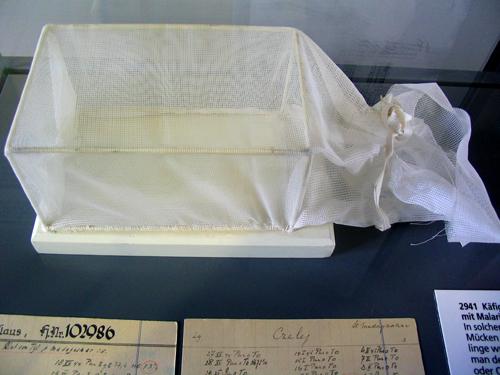Eritasunak eltxoen bitartez txertatzeko asmakizuna. Irudia: Juanma Gallego