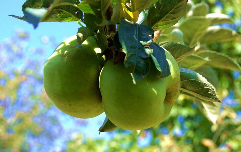 Fruta. Foto: Javier Legaz
