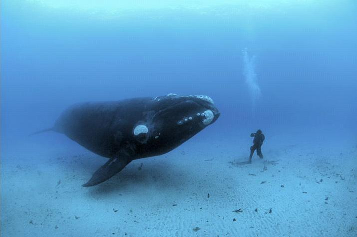 FOTO.Entre ballenas