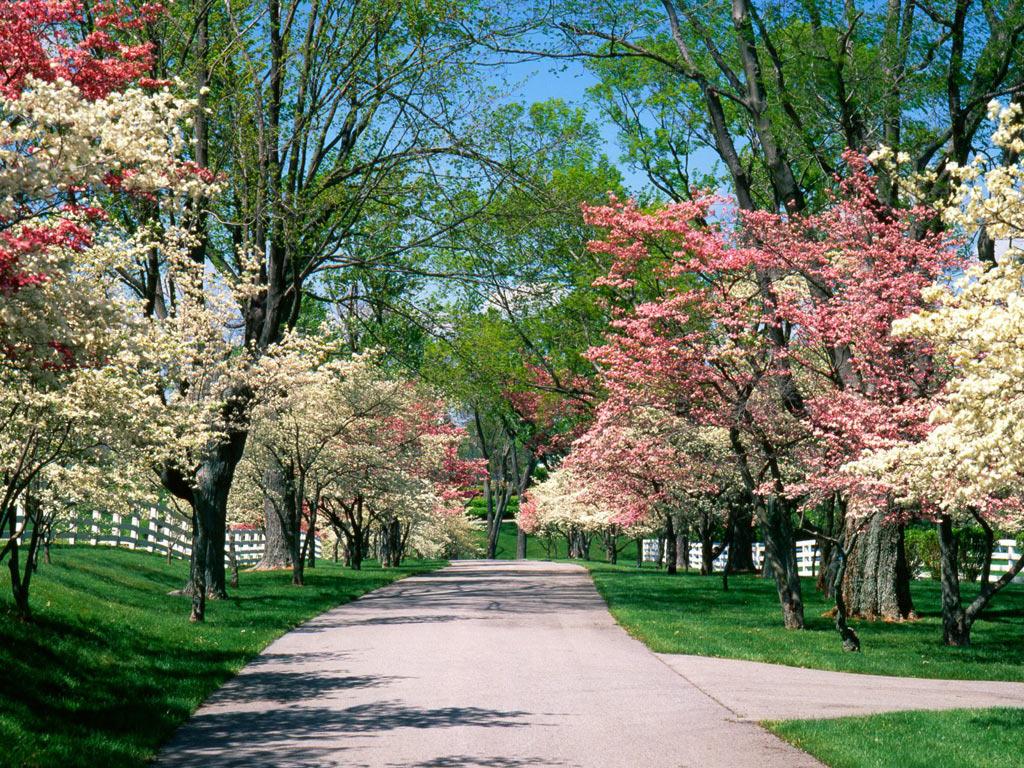 FOTO Poesía en primavera