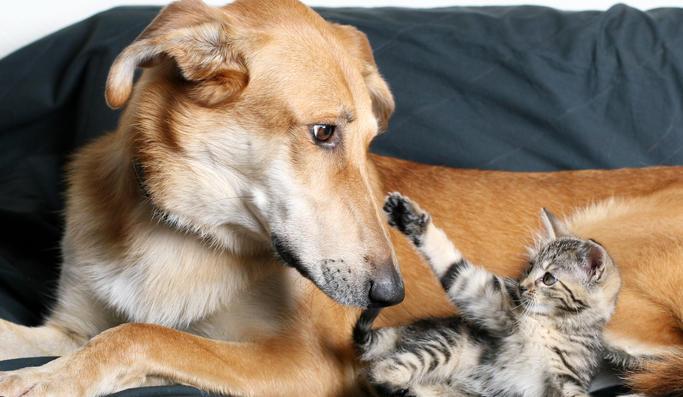 foto-perros-y-gatos
