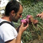 La cebolla roja de Zalla, producto Slow Food