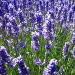 Aromaterapia para fomentar las emociones positivas