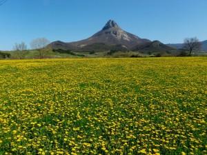 Éste es el campo que podría estar cuidando Luis según Lázaro González