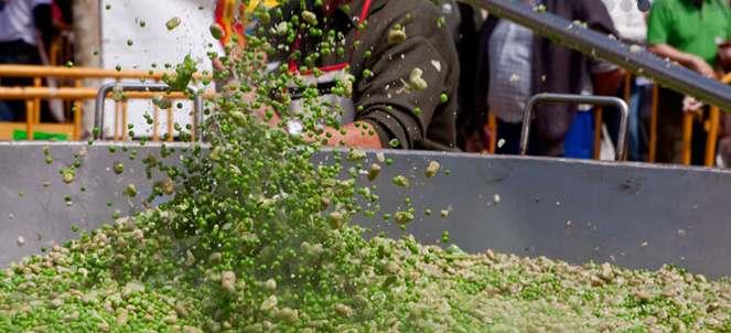 Jornadas de Exaltación y Fiestas de la Verdura. Foto: www.jornadasverduratudela.com/