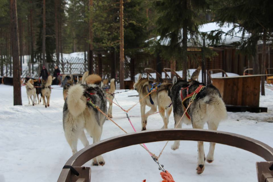 huskies-nieve-paseo-laponia-finlandia