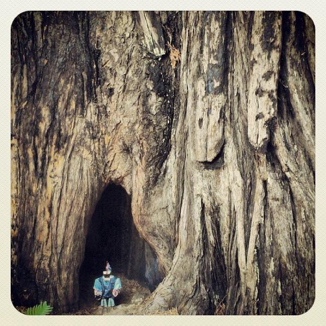Pudimos disfrutar de unas horas con uno de los árboles más grandes y ancianos del planeta.