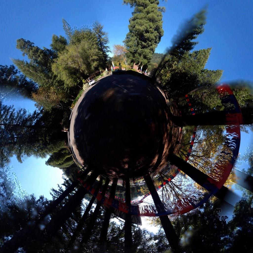 Foto estereográfica del Big Father Tree y el parque donde se ubica.