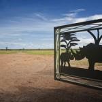 Kenya, rinocerontes