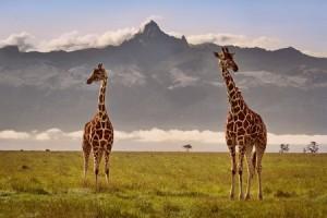 Mount Kenya © Madame Oreille[1]
