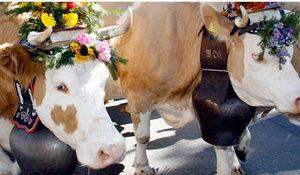 Descenso del ganado stephan-1