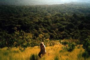 Kakamega Forest Overview