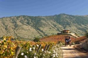 CHILE, Ruta_del_Vino_Valle_de_Colchagua