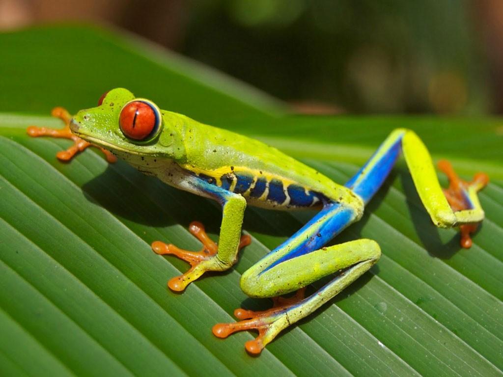 Centroamerica biodiversidad