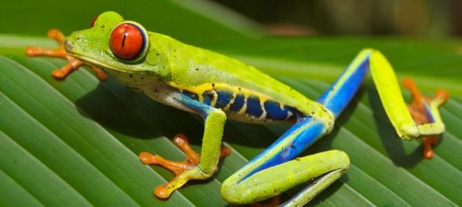 Centroamérica, un destino único para los amantes de la biodiversidad