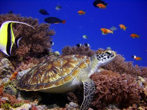The Residence Zanzibar , PADI.Turtle