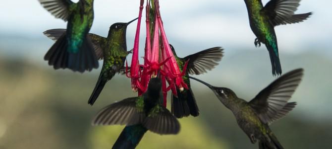 COSTA RICA lanza la Ruta Nacional de las Aves
