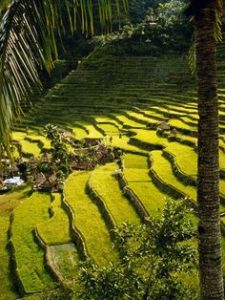 Terrazas de arroz.Mabuhay a Banué