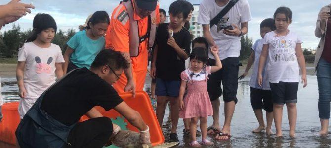 TAIWAN devuelve al mar cuatro tortugas rehabilitadas y recuerda la importancia de la conservación marina